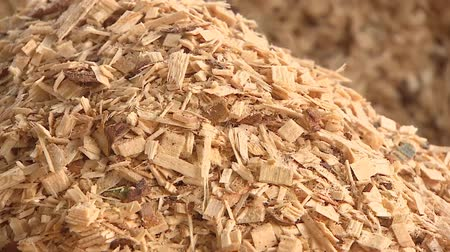 havlama : Production of wood shavings at a woodworking factory. Sawmill processes trees into shavings. Stok Video