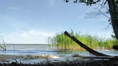A beautiful lake formed by glaciers. Lake in the Belarusian reserve. Time lapse. Stok Video