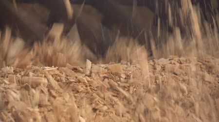 softwood forest : Production of wood shavings at a woodworking factory. Sawmill processes trees into shavings. Stock Footage