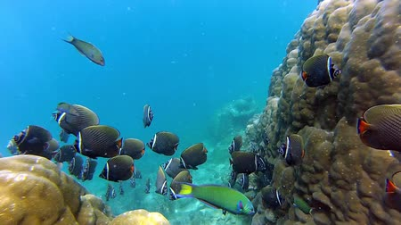 sualtı : Bright life of the Coral reef