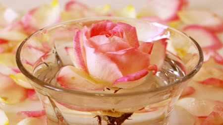 aromaterapia : White Rose in a bowl of water and  petals.