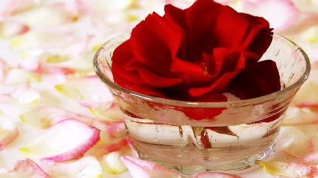 aromaterapia : Red Rose in a bowl of water and white petals.
