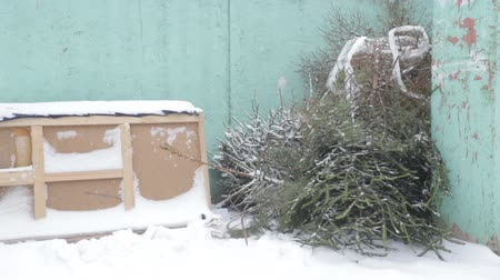 discard : The discarded Christmas tree after the new year on the trash, winter, blizzard