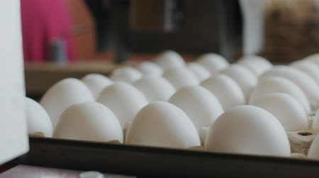 для продажи : Automated device marks hen eggs in a small farmhouse Стоковые видеозаписи
