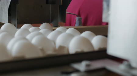 casca de ovo : Automated device marks chicken eggs in the poultry farm