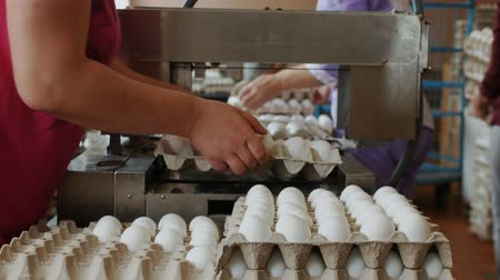 egg sorting : Employees pack fresh hen eggs in the sorting chicken factory Stock Footage