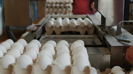 egg sorting : Employees of eggs farm pack hen eggs by hands into the cardboard trays