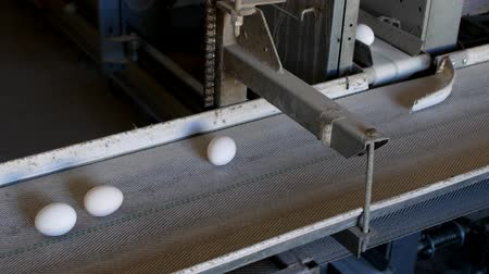 madárinfluenza : The production of chicken eggs, poultry, chicken eggs go through the conveyor for further sorting, close-up, factory eggs