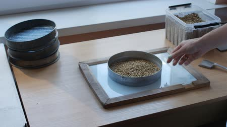 zab : Sieving by hand of grains of wheat, oat, barley, rye by sifter for quality control or analysis