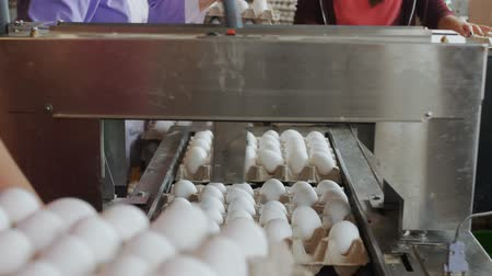 egg sorting : Hen eggs packing by hands into the carton trays in farmhouse Stock Footage