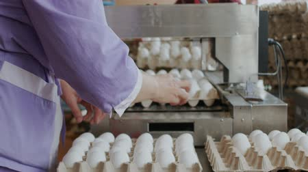 egg sorting : Chicken farm poultry workers sorting hen eggs at factory conveyor