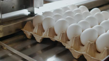 для продажи : Automated device marks hen eggs in a small chicken factory