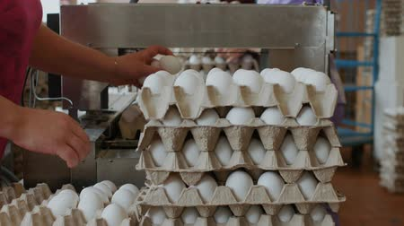 для продажи : Workers pack fresh hen eggs in the sorting chicken factory Стоковые видеозаписи