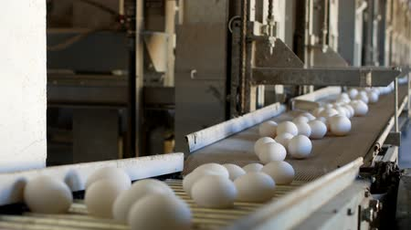 madárinfluenza : The production of chicken eggs, poultry, chicken eggs go through the conveyor for further sorting, close-up, factory Stock mozgókép