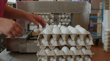egg sorting : Workers pack fresh hen eggs in the sorting chicken factory Stock Footage