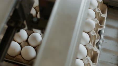 egg sorting : Automated device marks hen eggs in a small farmhouse Stock Footage