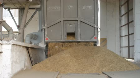 winda : The car truck ships out corns or grains of rye into the elevator, agriculture
