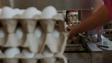 tray : Employees pack raw hen eggs into the carton trays in the sorting chicken factory