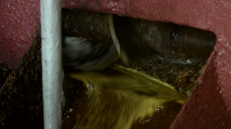 kidolgozása : Production of rapeseed oil, output of rapeseed oil from the press to the storage tank, close-up. rape oil