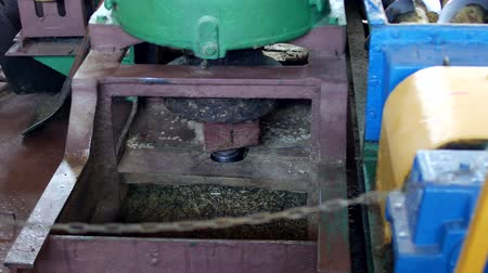 disintegration : Production for the processing of rapeseed oilseeds and the production of rapeseed oil, the work of the roaster, the shafts of the roaster stir the crushed rape, equipment