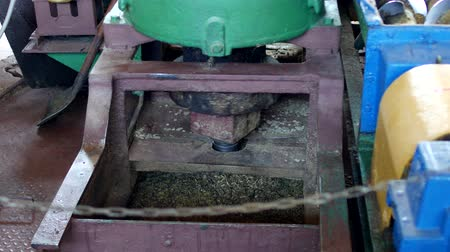 kidolgozása : Production for the processing of rapeseed oilseeds and the production of rapeseed oil, the work of the roaster, the shafts of the roaster stir the crushed rape, rapeseed Stock mozgókép