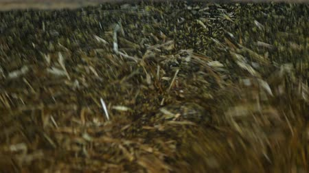 roaster : Production for the processing of rapeseed oilseeds and the production of rapeseed oil, the work of the roaster, the shafts of the roaster stir the crushed rape, roaster, close-up Stock Footage