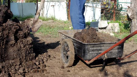 muck : A man digs manure with a shovel to fertilize the soil and loads it into a garden cart for distribution around the garden, shovel