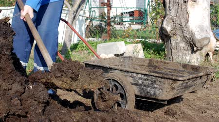 el arabası : A man digs manure with a shovel to fertilize the soil and loads it into a garden cart for distribution around the garden, dung