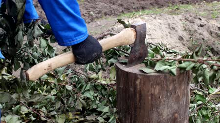 fatörzs : a man cuts branches with an ax, work at the dacha, close-up, cutting of branches, manual labor, steel