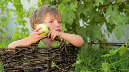 schooler : Kid sitting in the basket and eating green apple. Outdoor activities. Child in the park.