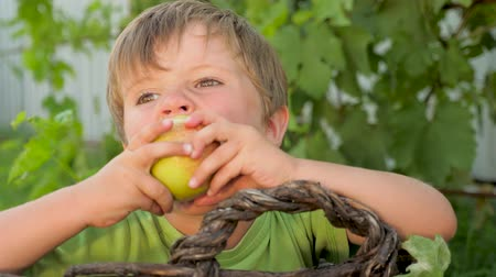 amadurecida : Matured apple in the hand of cute boy on green leaves background Stock Footage