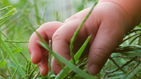 чувствовать : New life concept. Life beginning. Babys hand on the grass. Human and nature. Стоковые видеозаписи