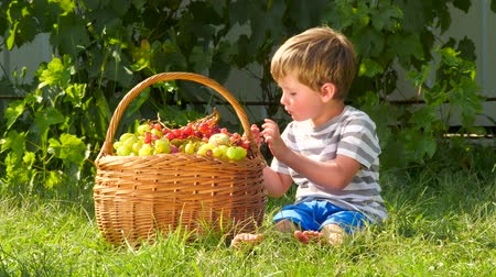 winogrona : Organic food concept. Healthy lifestyle background. Vitamins. Dieating.