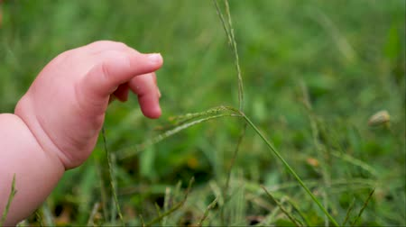 sentido : Hand of baby touching the grass. Vídeos