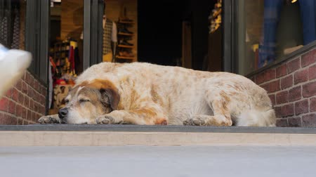 потреблять : Christmas shopping background. Beautiful dog sleeping near glass entrance door. Busy city and animal on side. City life on busy working day.