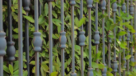 closing : Security and safety of private house, territory background. Closing gates with green leaves of hedge growing close to forged gates. Side view. Close-up. Automated gate. Green fence background Stock Footage