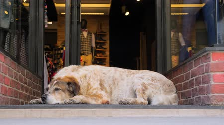 consumir : Busy city and animal on side. Busy shopping street in Athens, Greece. City life on busy working day. Dog in the city. Dog sleeping near shop door while passers-by are in a hurry. Unique in the crowd Stock Footage