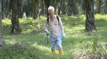 herbicides : Worker is spraying herbicides to poisoning weeds in oil palm plantations