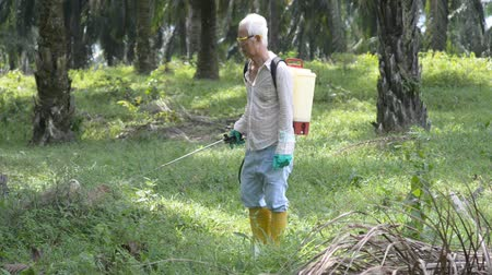 spraying : Worker is spraying herbicides to poisoning weeds in oil palm plantations