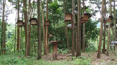 tartás : Bee hives in the tropical forest footage video. Stock mozgókép