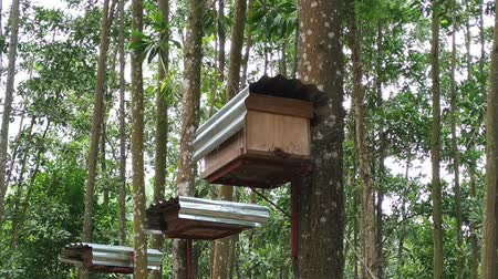 beporzás : Bee hives in the tropical forest footage video. Stock mozgókép