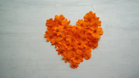 Heart shape orange cosmos flower on wooden background.