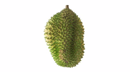 exotismo : Durian turning around, isolated on white background.
