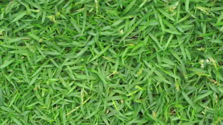 turf : Green grass background, top down close up still video, 4k footage.