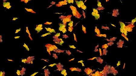 autumn : Flying colorful maple leaves. Autumn, fall background. Slow motion, close-up HD realistic 3D animation.