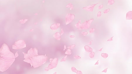Falling pink rose petals or cherry tree blossoms. Spring slow motion HD animation, close up with blurred background. Stock mozgókép
