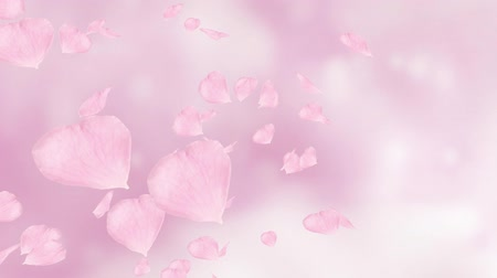 pink : Falling and swirling pink rose petals or cherry tree blossoms. Spring slow motion HD animation, close up with blurred background. Japanese design. Stock Footage