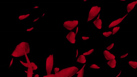 Falling red rose petals. Valentine slow motion HD animation, close up with black background. Stock mozgókép