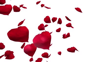 Falling and swirling red rose petals over white background. Valentine slow motion HD animation, close up.
