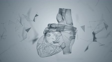 sirkülasyon : The human heart is formed by spinning particles.